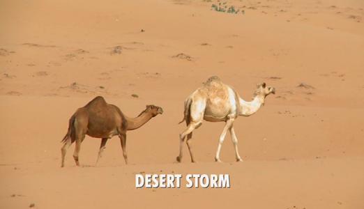 Doctor Who: Desert Storm